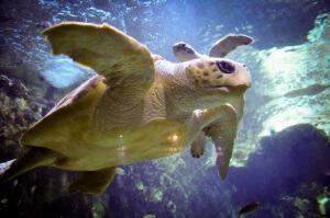 snorkel à Isla del Caño