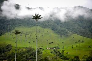 Colombie - Salento - vallee du Cocora - Palmiers de cire - Latinexperience voyages