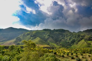 Colombie - Salento - Vallée de Cocora - Latinexperience voyages